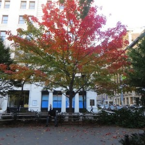 Washington Square Park Fall: Leaves Changing Color, Arch Un-barricaded, Time Traveler & The New Moon Take Center 'Stage'