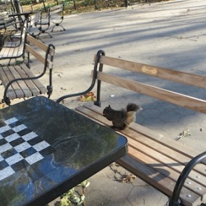 Seen At the Chess Plaza —