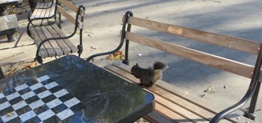 black_squirrel_washington_square_chess_table