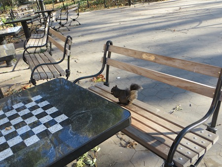 black_squirrel_washington_square_chess_table