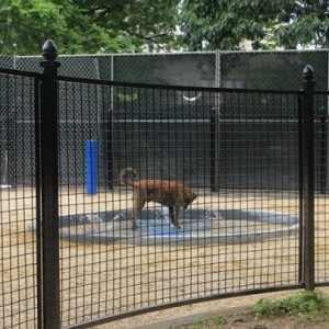 Washington Square Park Large Dog Run Opens! First Part of Long Awaited Phase III Construction Open to the Public