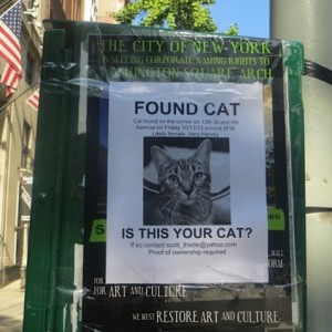 Are you Missing a Brown Tabby Cat? Found at 13th and Sixth, Manhattan