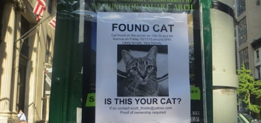 missing_cat_13th_and_sixth