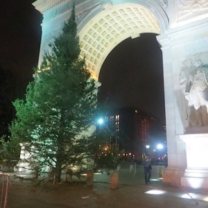 Christmas Tree has Arrived Under the Arch | Washington Square Tree Lighting Ceremony Wednesday, December 11th 6 p.m.!