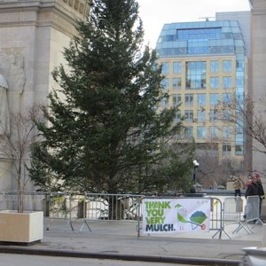 Weekend Washington Square – Trees Left On the Plaza Post-MulchFest As Hawks Soar Overhead & Squirrels Beg Favor