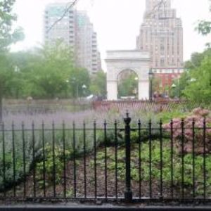 Help Create Amazing, Virtual, Mobile Map of Washington Square Park's Trees and Buried Minetta Creek – Contribute Today!