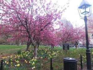 washington_square_park_late_april_2014