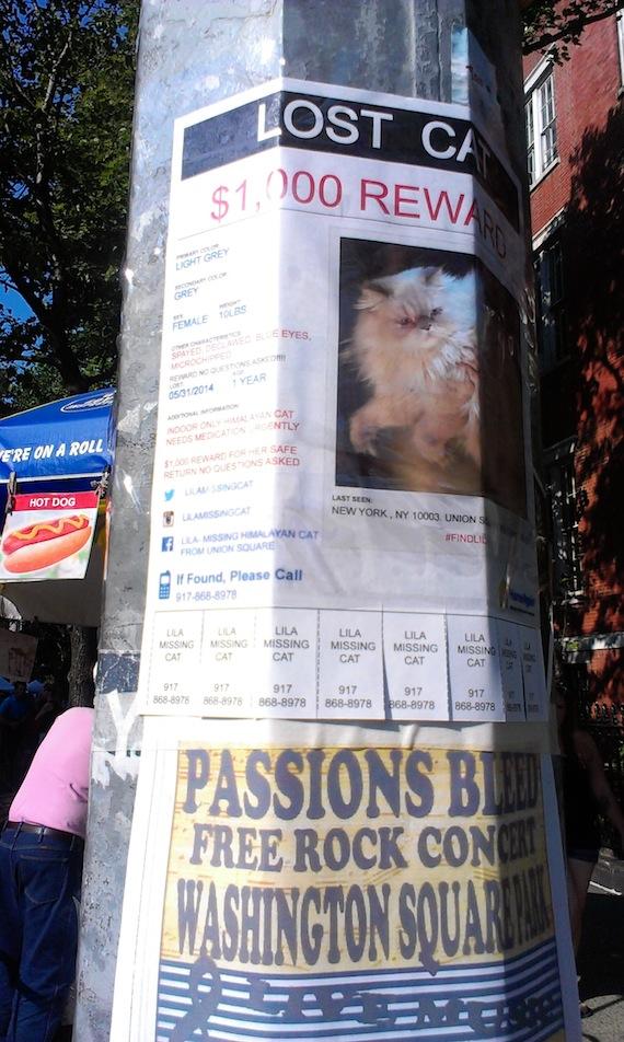lost_cat_lila_washington_square_union_square