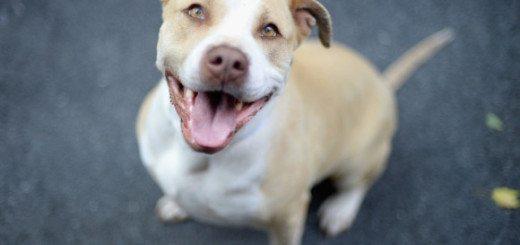 ACC Dog for Adoption