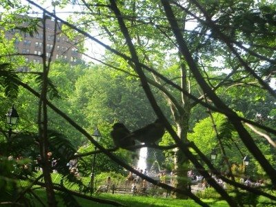 young_sparrows_in_trees_washington_square