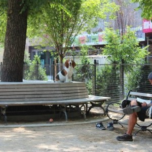 dog_run_washington_square_park
