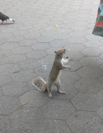 squirrel_wants_food_washington_square