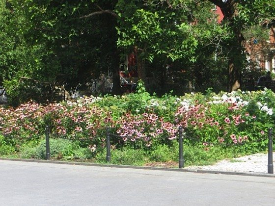 floral_washington_square_greenwich_village_summer