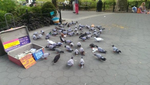 Look Closely! Pigeons as Art in Washington Square Park