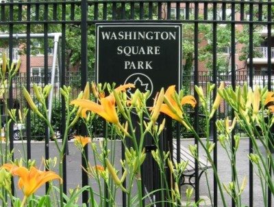 Day Lillies at the Park