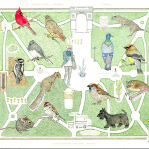 A Map of the Natural Inhabitants & Visitors of Washington Square Park