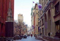 Purple flags, NYU purple reign