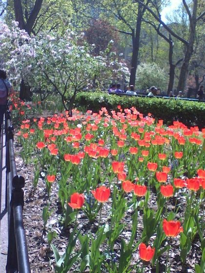 tulip patch in former park design, east of Arch, now deleted (larger alcove behind it)