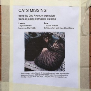 Missing Animals from East Village Explosion: 7 Cats from Buildings Unaccounted for, Likely More | Plight of Animals Omitted from Media Reports (Updated)