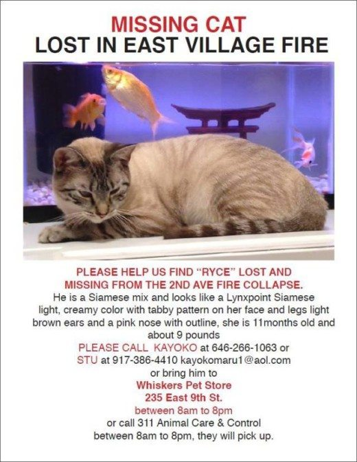 The Search to Find Ryce the Cat at 125 Second Avenue | Other Cats Remain Missing, East Village Fire