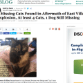 huffington_post_piece_on_animal_rescue_efforts_east_village_explosion_cathryn_swan_missing_sylvie