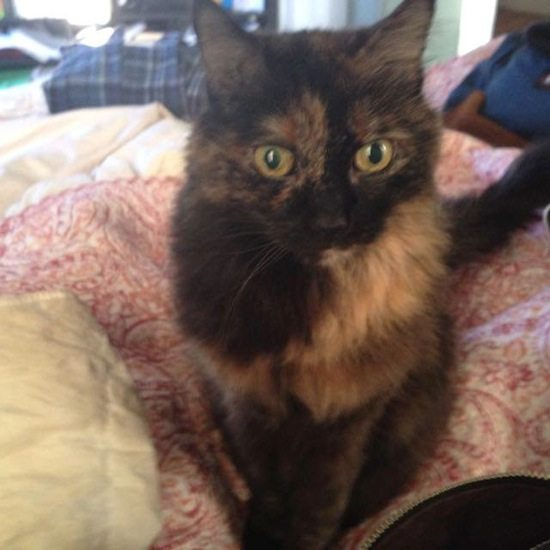Sylvie, 119 second avenue, is missing