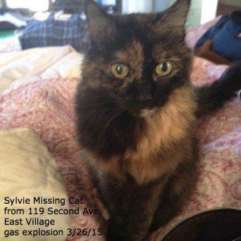 Sylvie Still Missing