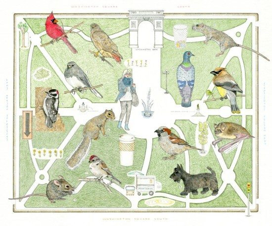washington square park map natural inhabitants humans and wildlife