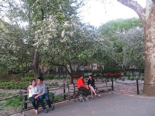 flowering_tree_washington_square_park_spring
