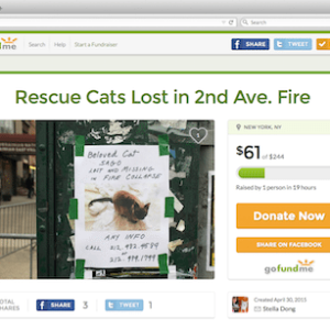 """Donate to Help Search for """"East Village Four"""" Missing Cats from Fire"""