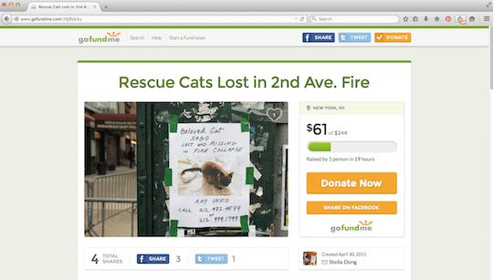 Raise Money Rescue East Village Fire Missing Cats