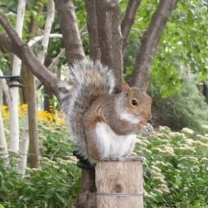 squirrel washington square park greenwich village nyc