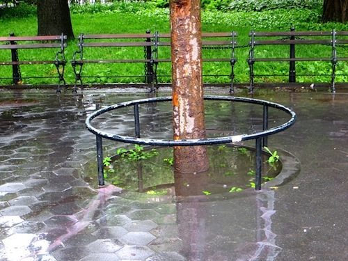 flooded tree pit around fountain