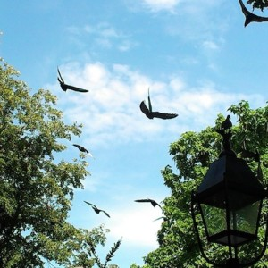 "NYC Parks to Pigeon Abducters: Don't Steal Our Animals! — ""Pigeons are Core to Character of NYC"""