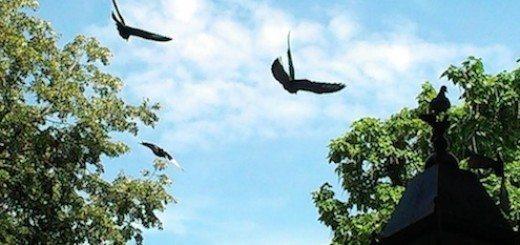 The Washington Square Park pigeons