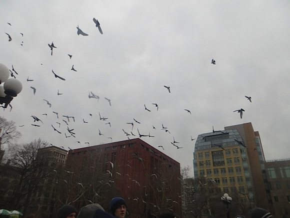 Pigeon Flyover at Hot Dog Vendor Rally