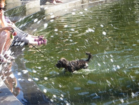 dog-washington-square-park-fountain