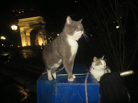 cats christmas eve washington square