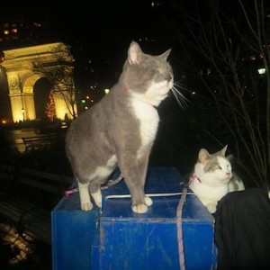 Homeless Cats Visit Washington Square Christmas Eve With Guardians After Displacement