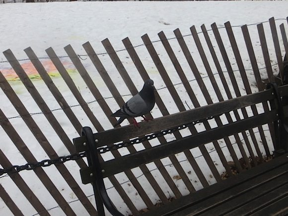 Pigeon on bench washington square park