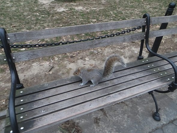 squirrel-park-bench-washington-square-park-5