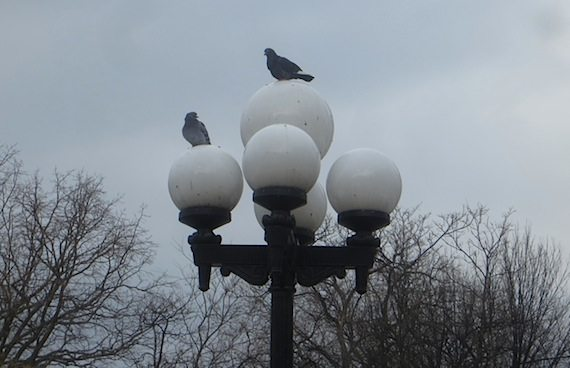 pigeons lights washington square park
