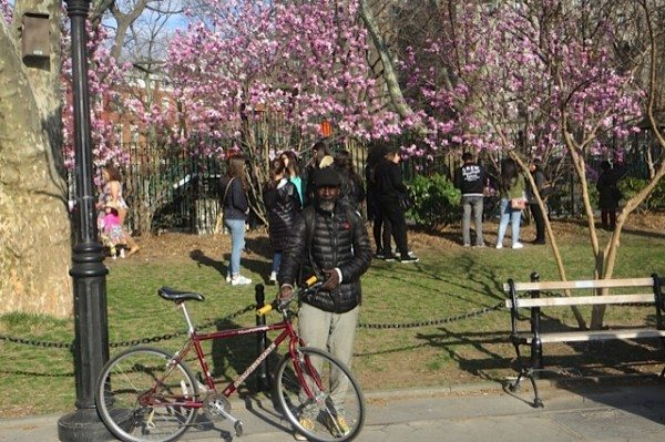 man with bicycle cherry blossoms washington square park
