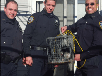 NYPD Rescues Astoria Rooftop Cat After 6 Days Atop Burnt Houses