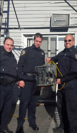 Astoria House Fire Rooftop Cat Rescued by NYPD New York City