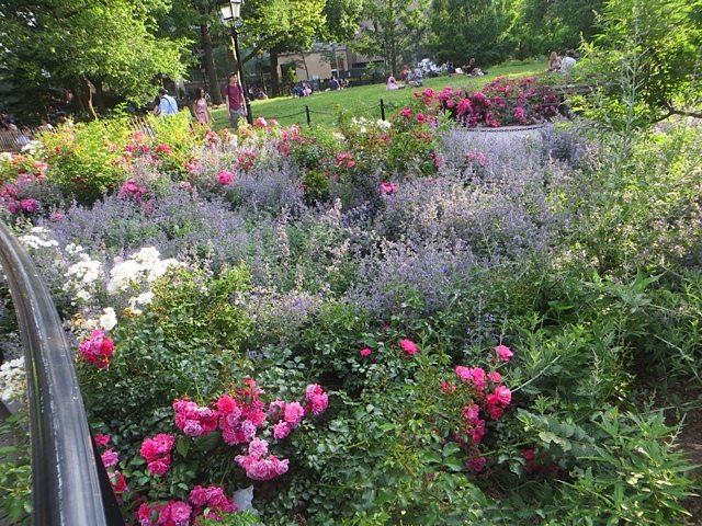 flowers-washington-square-park-june-2016