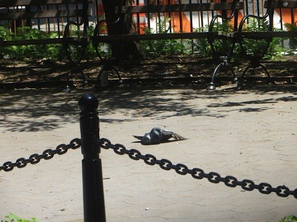 Pigeon sunbathes in an alcove