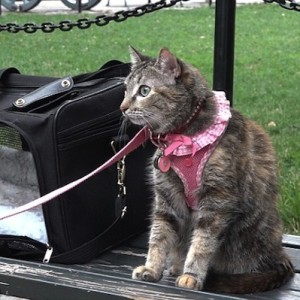 Mrs. Parberry the Cat on Washington Square Park Bench Social Experiment Daily Mail