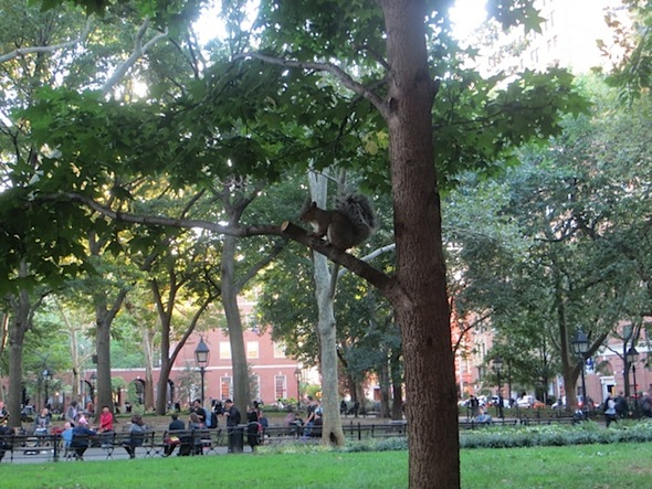 squirrel-on-a-tree-music-washington-square-park-west