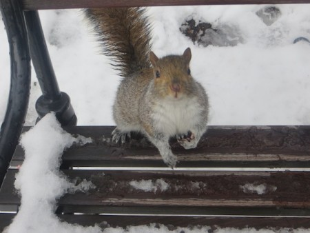 squirrel-snowy-saturday-washington-square-park-bench-7